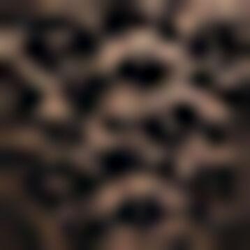 Culotte en dentelle Noire et motif pour femme Leopard Line, , DIM